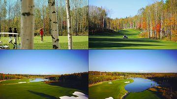 高尔夫球场视频