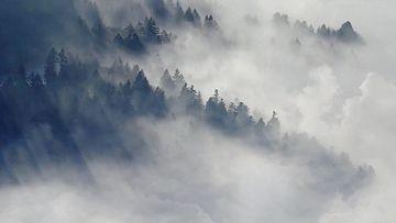 清晨烟雾环绕的山林农村视频