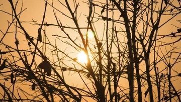 4K树干背后的太阳升起视频素材