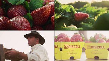 草莓种植园视频素材