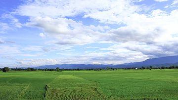 插秧的稻田延时摄影