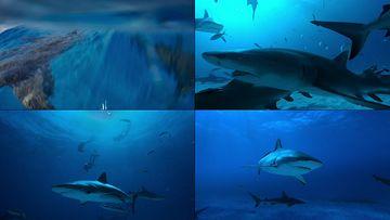 海洋里的鲨鱼