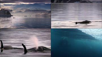 宁静唯美冒出水面的鲸鱼
