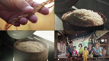 泰国大米视频素材
