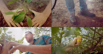 4K种树视频素材