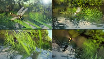 3D蜻蜓点水视频素材