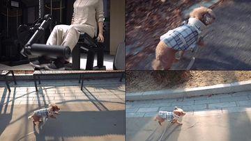 健身遛狗休闲办公视频