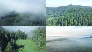 唯美意境的大森林晨雾视频