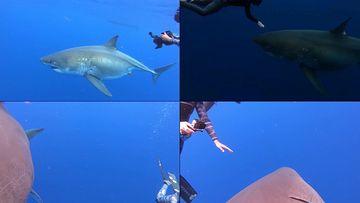 潜水拍摄鲨鱼