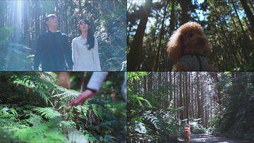 漫步在森林里的情侣视频素材