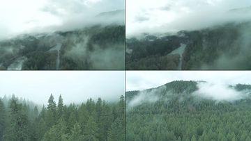 大气航拍云雾里的针叶林