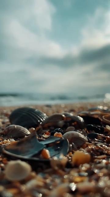 海边的贝壳竖屏