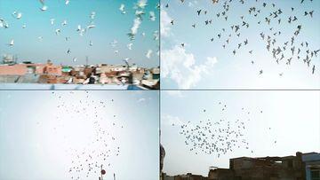 在天上飞舞的白鸽视频素材