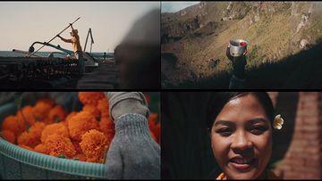 4k印度尼西亚农民采花视频素材