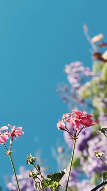 小粉红花竖屏视频素材