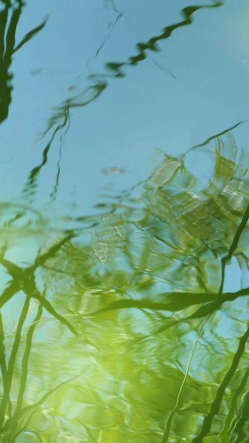 水滴落入池塘的水中竖屏视频素材